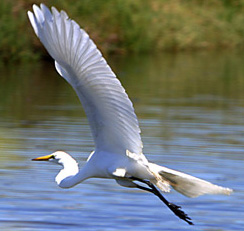 Take Flight on Your Healing Journey with Counseling Care Specialties